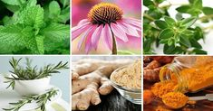 6 silných protizápalových byliniek a ako ich správne používať Herb Garden, Tofu, Health Fitness, Herbs, Vase, Homemade, Table Decorations, Plants, Diabetes
