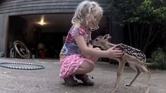 A Lost Newborn Deer Stumbles Into The Arms Of A Little Girl. What Happens Next Is Heartwarming!