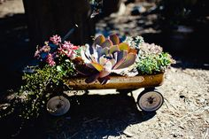 Old #wagon filled with #succulents