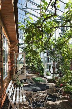 Wohnen im Grünen: Familie Solvarm lebt diesen Traum in einem 300 Quadratmeter großen Gewächshaus mit Mittelmeerklima. Hier ist immer Sommer.