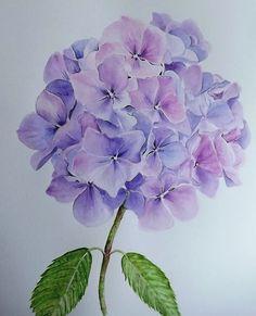Glennis Weston – blue hydrangea watercolor floral art