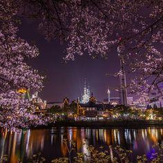 【benjamin.petit85】さんのInstagramをピンしています。 《Seokchon Lake. 석촌 호수 [2016] #Seoul_Korea #ig_korea #weseoul #photogsinkorea #ig_asia #iseoulu #한국 #nightview #서울 #벚꽃 #travel #spring #southkorea #seoul #nightshot #cherryblossom #explore #architecture #tower #discover #cityscape #urban #landscape #봄 #야경 #韓国 #旅行 #風景 #桜 #ソウル》