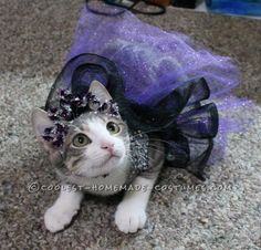Princess Luna Cat Costume... Coolest Halloween Costume Contest