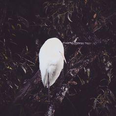 Wordpress, Bird, Animals, Instagram, Fotografia, Animales, Animaux, Birds, Animal