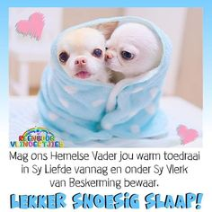 Good Night Blessings, Good Night Wishes, Good Night Sweet Dreams, Good Morning Vietnam, Goeie Nag, Afrikaans Quotes, Christian Messages, Special Quotes, Sleep Tight