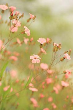 .little pink flowers in the morning summer light