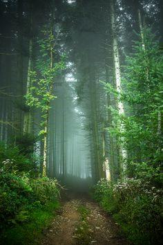 .path on camino de santiago