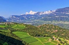 Trentino-Alto Adige is the northernmost wine region in Italy, and arguably one of the most striking,... - Trentino Alto Adige