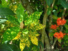 Dominica Photo by Brianna Lynee