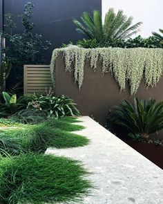 I keep going back to look at this gorgeous layering by 🌿🙌🏻 so thought I'd share it with you x 📷 😘 (Cottesloe Garden Design)