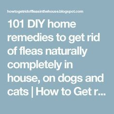 101 DIY home remedies to get rid of fleas naturally completely in house, on dogs and cats | How to Get rid of Fleas in the House and outside completely naturally