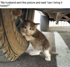 Man finds tiny kitten under truck, adopts her. She's doing fine now.