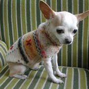 How to make a recycled dog sweater, by Cal Patch at CraftStylish. LOVE it!