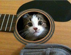 Kitten hiding in guitar. His new favorite hiding spot` .