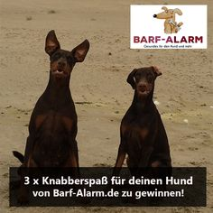 17. Dezember – 3 x Knabberspaß von Barf-Alarm.de zu gewinnen!