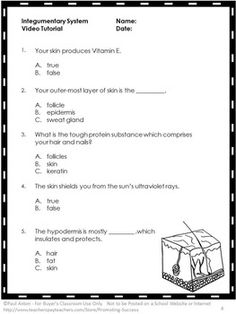 Body Systems Worksheets Answers