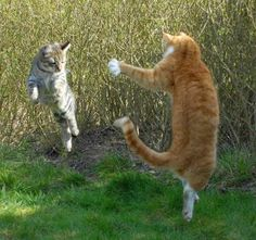 Leaping kitty cats!