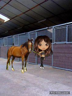 My Dutch momio account Accounting, Dutch, Horses, Animals, Animais, Animales, Dutch People, Animaux, Horse