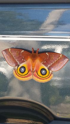 Since we're showing off cool moths on here. I thought I'd share this pic of a moth I found on my car last month. http://ift.tt/2sGdSFe