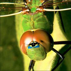Dragonfly!