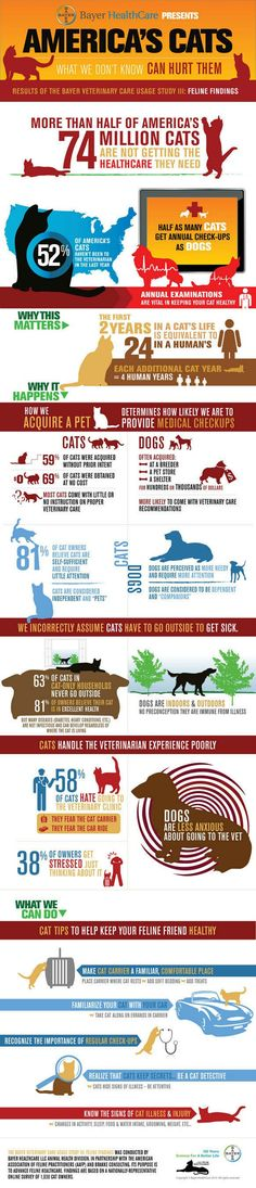 Cat Care Tips (Infographic) #cats #cat health