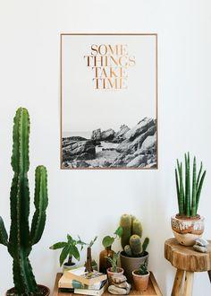 pflegeleichte Zimmerpflanzen, die wenig Licht brauchen