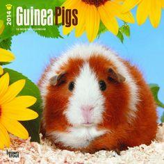 Guinea Pigs Wall Calendar 2014