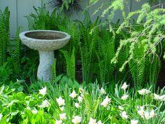 Nice birdbath in the ferns.