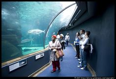 Two Oceans Aquarium Ocean Aquarium, Fish House, Conservation, Places To See, The Neighbourhood, Two By Two, America, Aquariums, Cape Town