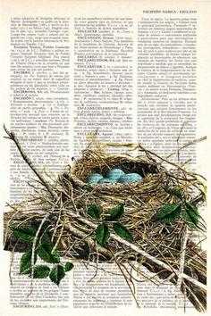 Gallery.ru / Фото #1 - птицы и клетки - Axnadi