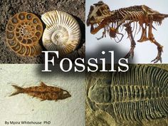 Fossils (teach)   by Moira Whitehouse via slideshare Powerpoint presentation that describes the fossilization process and types of fossils. I like that It also describes the law of superposition to share with students so they can understand how we know what fossil is older.  I also like the visuals and illustrations of the types of fossils used in the slides and can edit what slides are used in the lesson.  Content & Teaching Strategy
