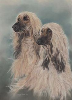 Afghan Hound Art Prints Mike Sibley Henry Wilkinson