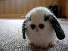 Emo bunny wears black eye makeup to stand apart from all those conformist white bunnies - SO FREAKING ADORABLE!
