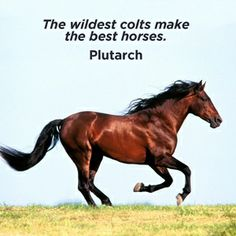 """""""The wildest colts make the best horses."""" - Plutarch"""
