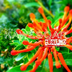 Bienvenidos al Proyecto Turismo Kawésqar Carrots, Vegetables, Food, Tourism, Essen, Carrot, Vegetable Recipes, Meals, Yemek