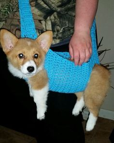Crocheted dog sling by Bennie.