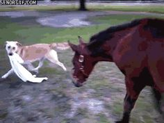 """Share this """"Horse And Dog Play Tag"""" animated gif image with everyone. Gif4Share is best source of Funny GIFs, Cats GIFs, Dog GIFs to Share on social networks and chat."""