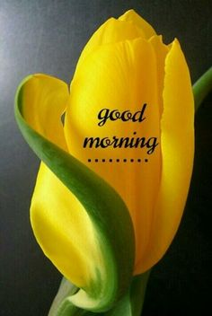 Looking for for inspiration for good morning handsome?Browse around this site for unique good morning handsome ideas. These funny quotes will you laugh. Lovely Good Morning Images, Good Morning Flowers, Good Morning Picture, Good Morning Friends, Good Morning Messages, Good Morning Good Night, Morning Pictures, Good Morning Wishes, Beautiful Morning