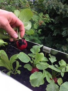 Wie man einen Balkongarten anlegt. Rooftop Garden, Balcony Garden, Container Gardening, Gardening Tips, Urban Gardening, Balcony Plants, My Secret Garden, Urban Farming, Green Garden