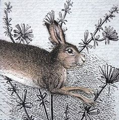 march hare in the flower bed