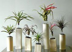 Tillandsien und andere Luftpflanzen richtig in Szene setzen