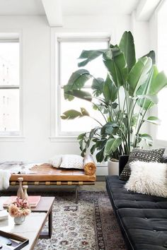 If you don't feel like having a bunch of little plants, one large plant can create a lot of drama and a great jungle vibe.
