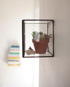 terrarium on the wall!