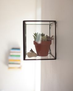Sneak Peek: Best of Indoor Plants. New Yorker Lotta Nieminen believes a home is all about the little details. This box is from West Elm and is home to an little succulent. #sneakpeek