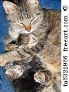 Cat With Newborn Kitten - Art Print