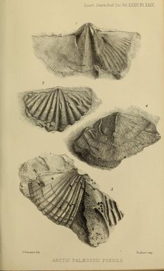 v.34 (1878) - The Quarterly journal of the Geological Society of London. - Biodiversity Heritage Library