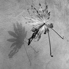 Some leaves caught mid air, with Pentax 67 II and Ilford FP4 film.