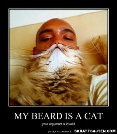 My Beard Is A Cat