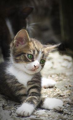 Sweet baby.  Look at those green eyes.
