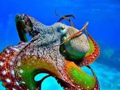 sea life - sea life photography - sea life underwater - sea life artwork - sea life watercolor sea l Underwater Creatures, Underwater Life, Ocean Creatures, Beneath The Sea, Under The Sea, Beautiful Creatures, Animals Beautiful, Fauna Marina, Photo Animaliere